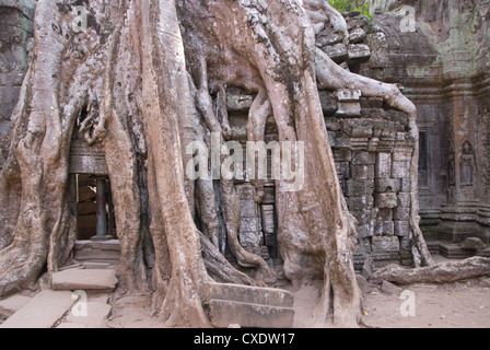 Ta Prohm, Angkor archäologischer Park, UNESCO-Weltkulturerbe, Siem Reap, Kambodscha, Indochina, Südostasien, Asien - Stockfoto