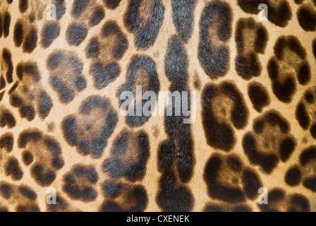 Leopard-Haut-Hintergrund