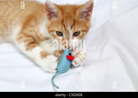Ingwer und weiße Kätzchen spielen mit Spielzeug-Maus