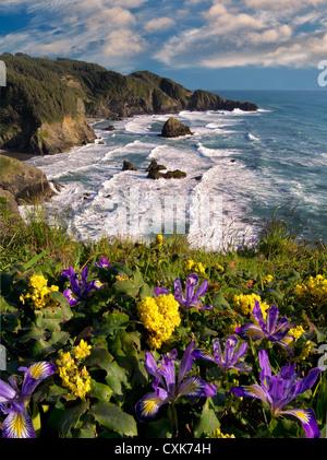 Wild Iris und Mahonie wächst auf Klippe Samuel H. Boardman State Scenic Korridor. Oregon - Stockfoto