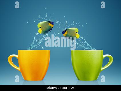 Kaiserfisch springen aus der Tasse mit Wasser spritzt und akrobatischen Bewegungen. - Stockfoto