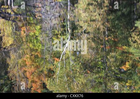 Bild der Bäume im Wasser - Stockfoto