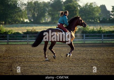 Arbeitspferd vor der Konkurrenz an Horse Show/Quentin horse show Quentin, Pa - Stockfoto