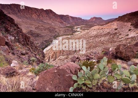 Feigenkakteen über Rio Grande in Colorado Canyon bei Sonnenaufgang von La Questa (Big Hill), Big Bend Ranch State - Stockfoto