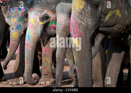 Bemalte Elefanten, Amer Fort, Amber Fort oder Palast Amber, Jaipur, Rajasthan, Indien, Asien - Stockfoto
