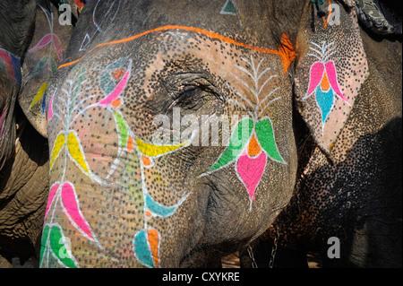 Malte Elefant, Amber oder Amer Fort, Amer Palast, Jaipur, Rajasthan, Indien, Asien - Stockfoto
