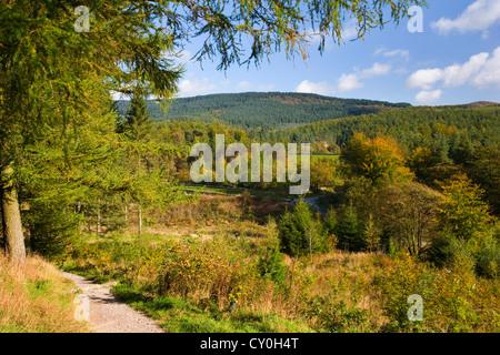 Blick auf Macclesfield Wald im Herbst in der Nähe von Langley; Macclesfield; Cheshire - Stockfoto
