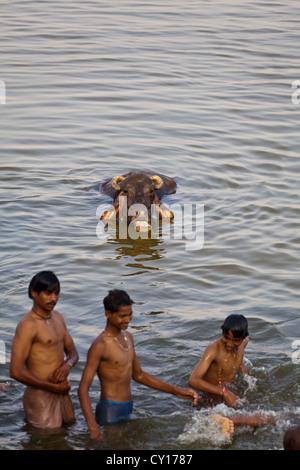 Junge Menschen teilen ein Bad mit Wasserbüffel in den heiligen Fluss Ganges in Varanasi, Indien - Stockfoto