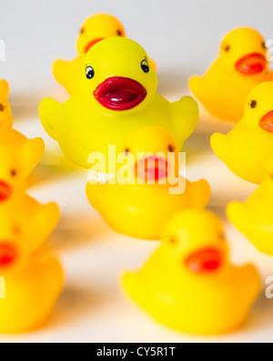 Gelbe Gummienten hintereinander aufgereiht - Stockfoto