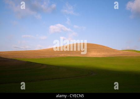 WA05482-00... WASHINGTON - Feldern in der Nähe der Stadt Steptoe in der Palouse Region. - Stockfoto