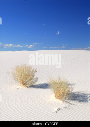 Sträucher wachsen in White Sand Dunes National Park in New Mexiko - Stockfoto