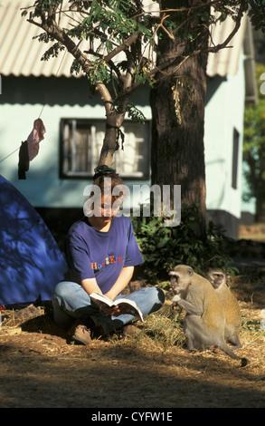 Simbabwe, in der Nähe von Victoria Falls, Tourist, Camping, Frau liest, Vervet Affen (grüne Aethiops). - Stockfoto