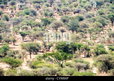 Der Tarangire National Park, Tansania - Bush Landschaft in der Tarangire National Park im Norden von Tansania, nicht - Stockfoto
