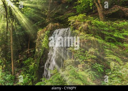Kleiner Wasserfall im Wald, die Sonne scheint durch die Bäume. - Stockfoto