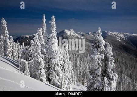 WASHINGTON - Steeple Felsen und schneebedeckte Bäume entlang der Observation Point Road auf Hurricane Ridge in Olympic - Stockfoto