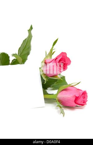 Rosa Rosen und leere Memo-Karte mit Platz für Ihren eigenen Text auf weißem Hintergrund - Stockfoto