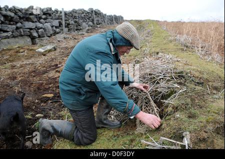 Auf der Suche nach Frettchen Kaninchenloch mit Funkempfänger - Stockfoto