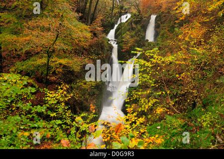 Herbstfärbung bei Stockghyll Force, Wasserfall im englischen Lake District - Stockfoto