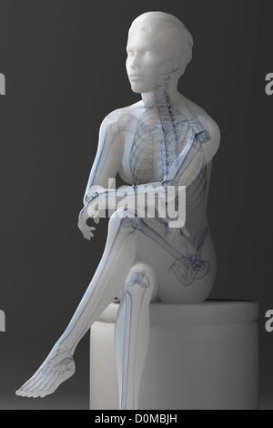Anatomisches Modell zeigt das menschliche Skelett und Muskulatur ...