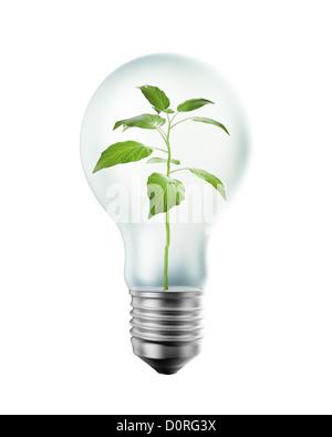 Pflanzen im Inneren einer Glühbirne - Stockfoto