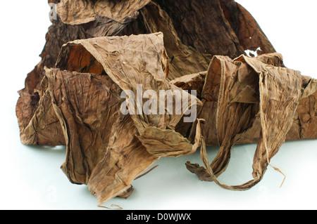 Getrockneten Tabakblätter weiß isoliert. Kubanische Alter Tabak - Stockfoto
