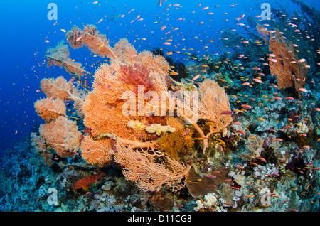 Typischen roten Meer Korallenriff, Panorama Reef, Safaga, Ägypten, Rotes Meer, Indischer Ozean - Stockfoto