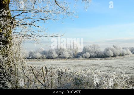 Kalten Winterlandschaft UK mit Abdeckung der Raureif - Stockfoto