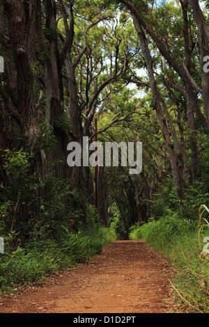 Weg in einem tropischen Wald mit Bäumen, die bogenförmig über Kopf - Stockfoto
