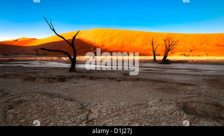 Namibias orangefarbenen Sanddünen am Deadvlei im Morgenlicht - Stockfoto