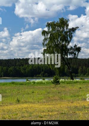 Birke auf der Sommerwiese mit Blick auf See Kielarskie im sonnigen Sommertag. - Stockfoto