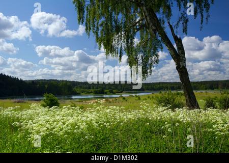 Birke auf der Sommerwiese mit Blick auf den See Kielarskie. - Stockfoto