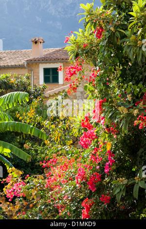 Sóller, Mallorca, Balearen, Spanien. Bunte Blumen inmitten üppiger Vegetation am Rande der Stadt. - Stockfoto