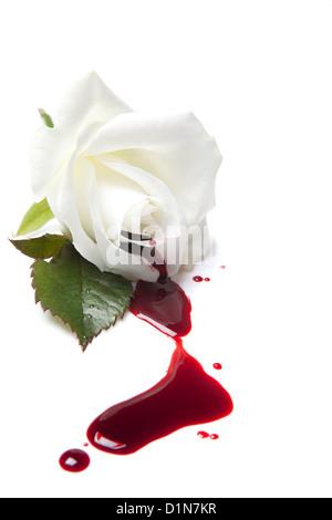 Weiße rose mit roten Blutkörperchen Wegfließen - Stockfoto