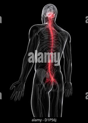 Schmerzen im Rücken, konzeptuellen Kunstwerk - Stockfoto