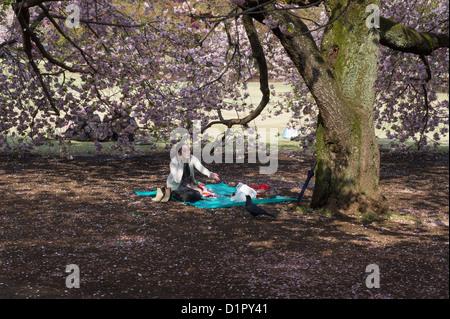 Frau und ein Vogel unter Kirschbaum in Shinjuku Gyōen Nationalgarten, Shinjuku Park. - Stockfoto