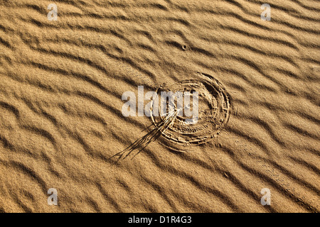 Marokko, M' Hamid, Erg Chigaga Dünen. Wüste Sahara. Rippelmarken Detail. Kleinen Busch machen markiert Sand rechtzeitig - Stockfoto