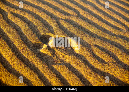Marokko, M' Hamid, Erg Chigaga Dünen. Wüste Sahara. Rippelmarken Detail. Fußstapfen. - Stockfoto