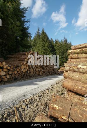 Frisch geschnittenen Sie Baumstämmen aufgestapelt - Stockfoto