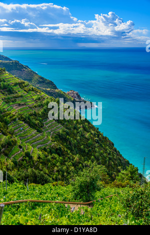 Weinberge entlang der Cinque Terre Küste, Italien - Stockfoto