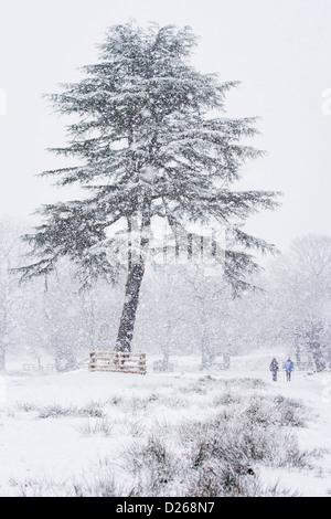 Bradgate Park in Leicestershire verwandelte sich in ein Winterwunderland mit der Ankunft der ersten schweren Schnee - Stockfoto
