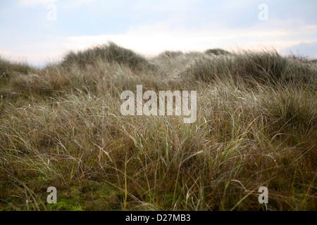Gras und Sedge bedeckte Sanddüne bei Sea Palling, Norfolk, im winterlichen Licht