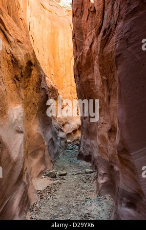 Trocknen Sie, Gabel Slotcanyon, Freitreppe Nationaldenkmal, Escalante, Utah, usa - Stockfoto
