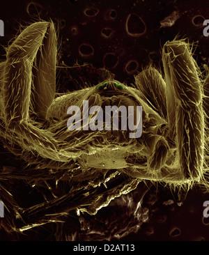 REM-Bild der Spinne - Stockfoto