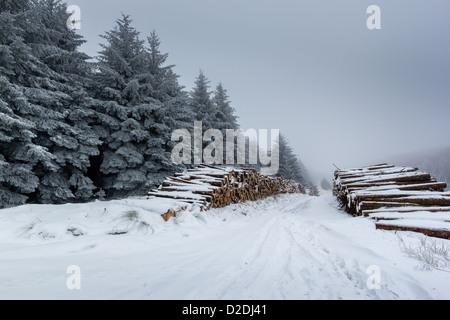 Schneebedeckte Protokolle und Fell Bäume an einem kalten, nebligen Wintertag - Stockfoto