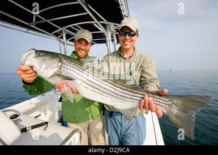 Zwei Männer halten einen frischen Gefangenen Striped Bass; Massachusetts Vereinigte Staaten von Amerika - Stockfoto