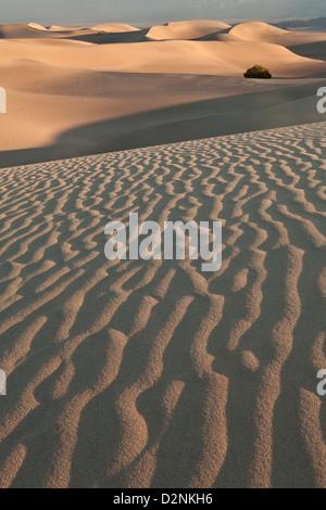 Licht auf dem goldenen Sand von Mesquite flachen Dünen nahe Stovepipe Wells in Death Valley Nationalpark, Kalifornien. - Stockfoto