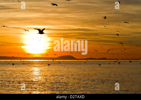 Sunrise, Isla Rasa, Golf von Kalifornien (Sea of Cortez), Baja California, Mexiko, Nordamerika - Stockfoto