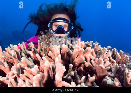 Lacey Drachenköpfe Aphanes mit einem weiblichen Taucher, Great Barrier Reef, Queensland, Australien, Coral Sea, - Stockfoto