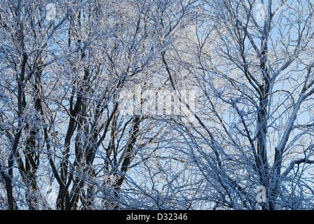Einen schneebedeckten Baum im Winter vor einem strahlend blauen Himmelshintergrund mit jeder Zweig mit Frost sehr - Stockfoto