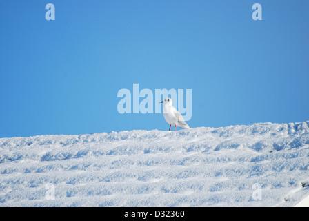 Eine Möwe auf einem Dach bedeckt im Schnee, im Winter mit einem strahlend blauen Himmelshintergrund mit sehr einfachen - Stockfoto